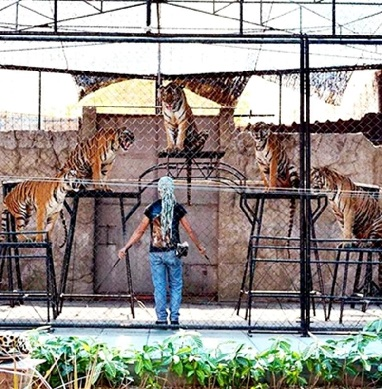 Full Show Half Day Aquarium and Tiger Show
